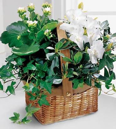Green Plant Assortment Basket