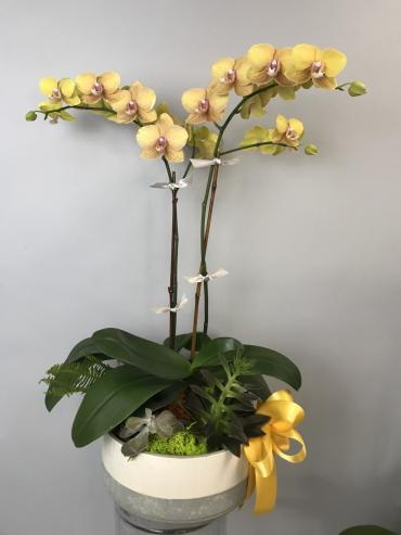 The Orchid Arrangement with Succulent Plants